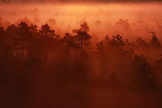 Hommik Männikjärve rabas (Tauri Pärna)