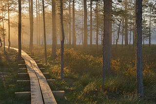 Päikesetõus Viru rabas. Foto: Urmas Haljaste.