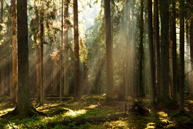 Valgesoo mets